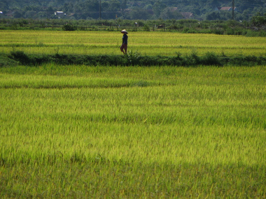 A farmer in the field, Phong Nha, Vietnam.