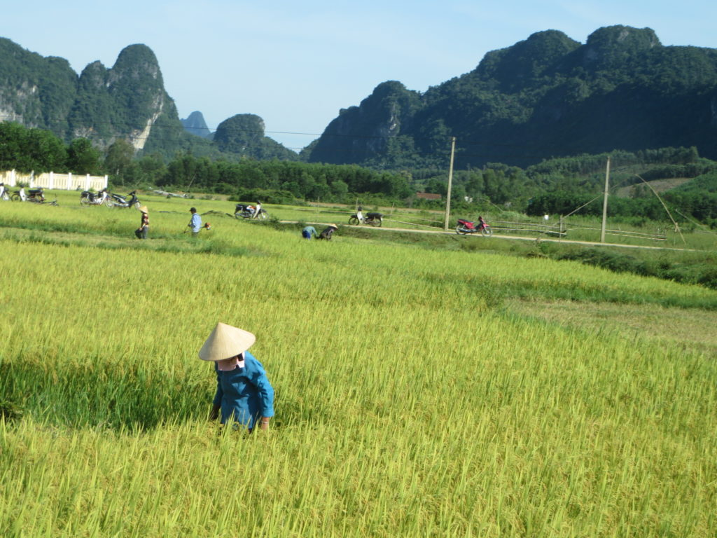 Farmers in rural Vietnam.