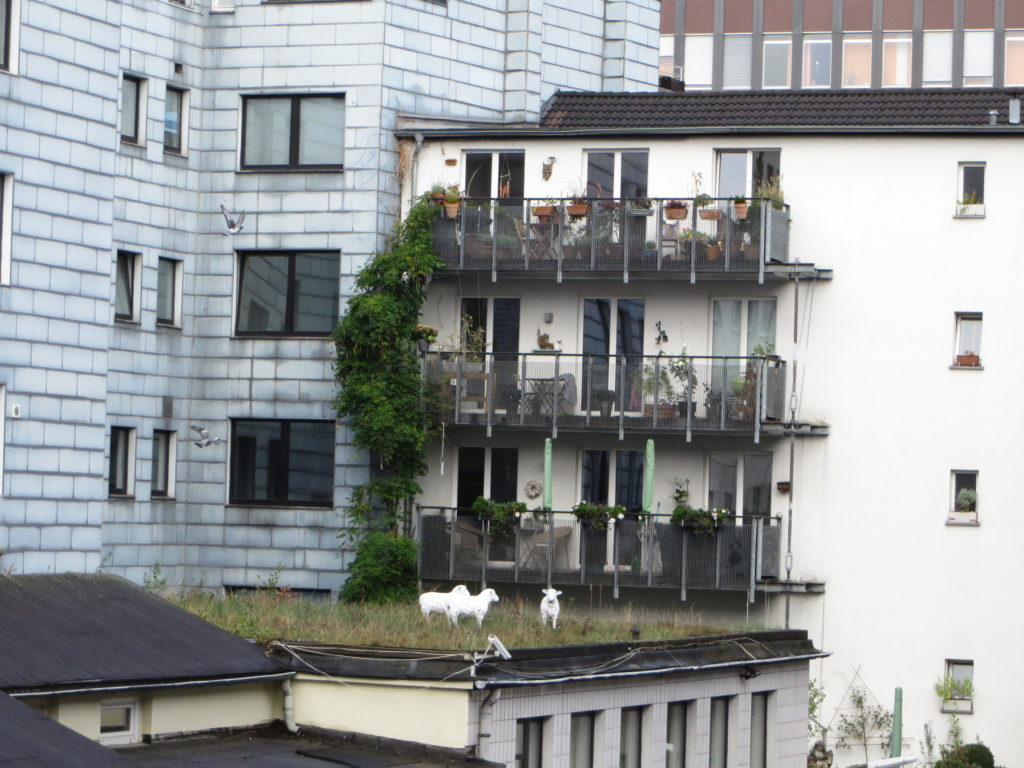 Sheep (not real) on the roof across from our flat in Dortmund.
