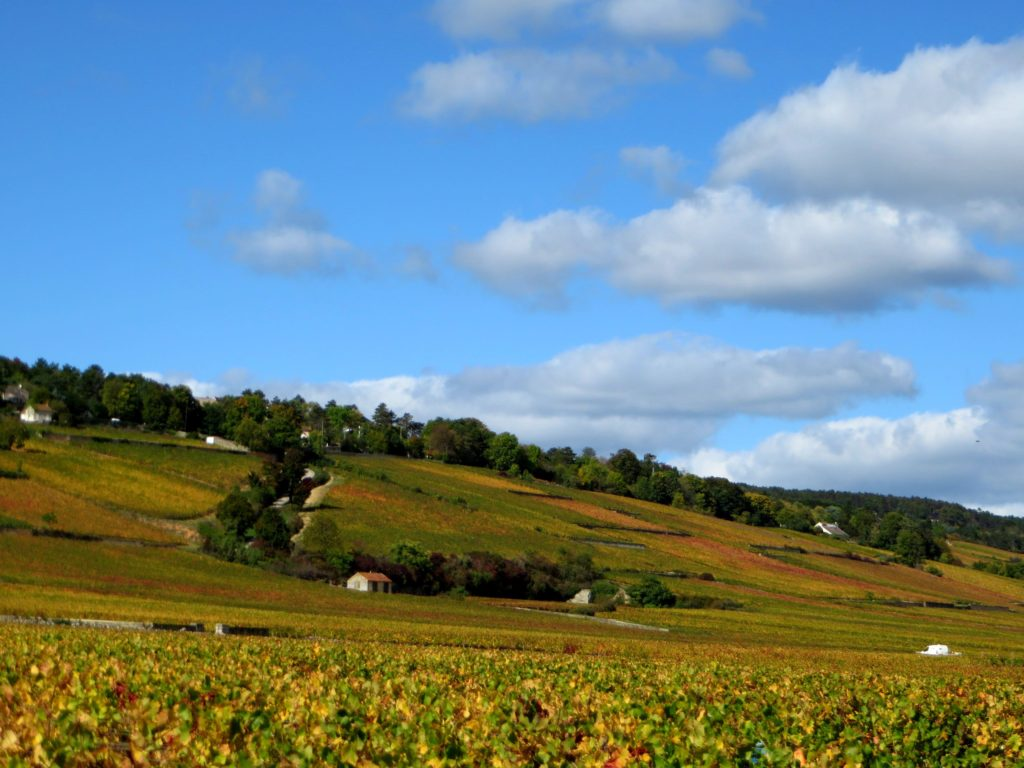 The vineyards around Beaune.
