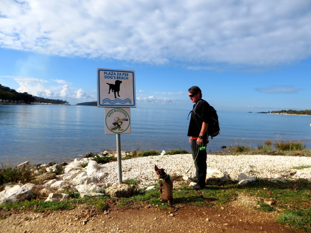 The smallest dog beach ever!