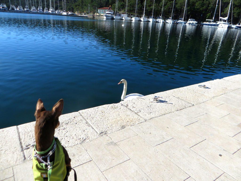 Sebastian meets a goose at the marina.