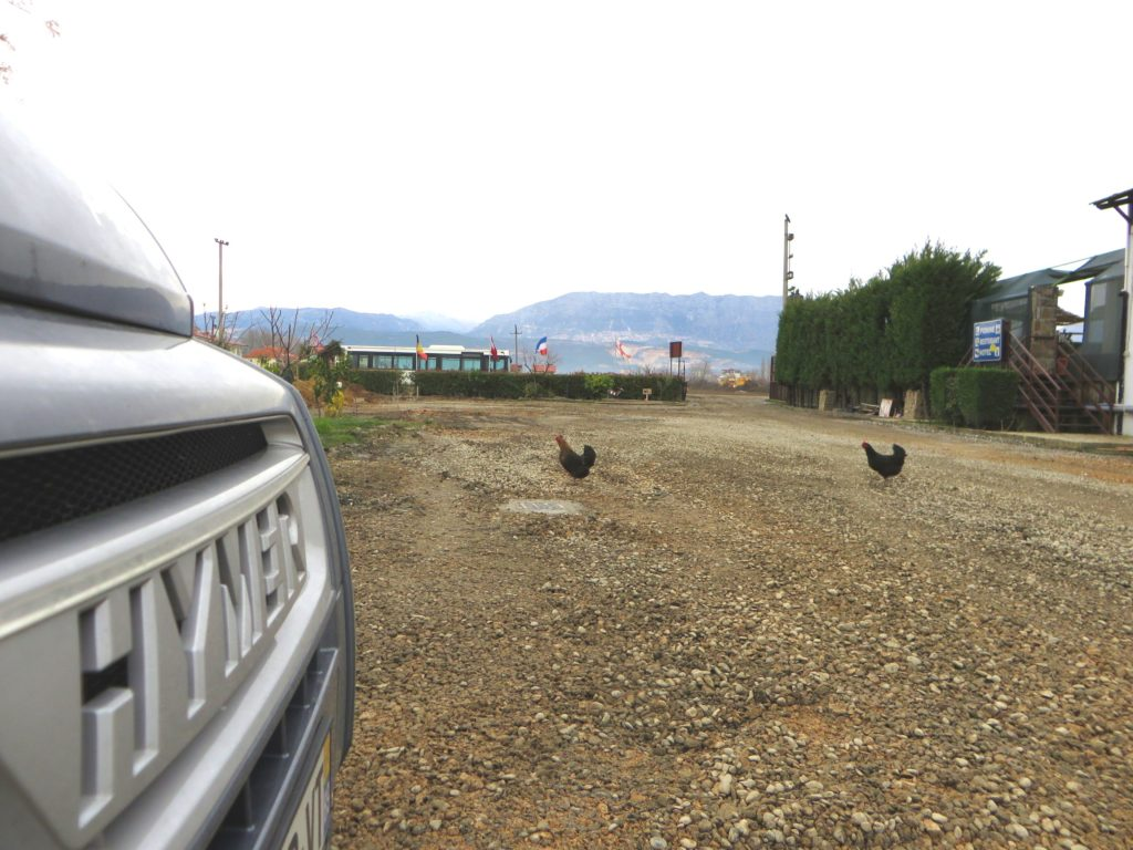 Free range chickens at Nord Park.
